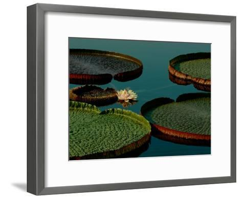 Victoria Water Lilies-James P^ Blair-Framed Art Print