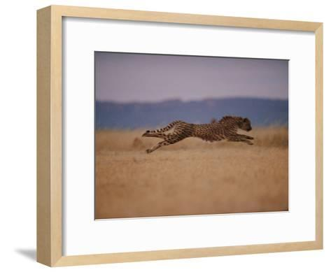 A Cheetah with Limbs Parallel to the Ground While in Full Sprint-Chris Johns-Framed Art Print
