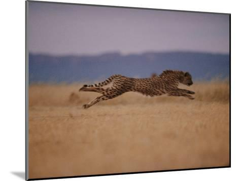 A Cheetah with Limbs Parallel to the Ground While in Full Sprint-Chris Johns-Mounted Photographic Print