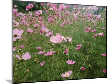 Wildflowers Above the Village of Namche-Michael Klesius-Mounted Photographic Print