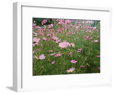 Wildflowers Above the Village of Namche-Michael Klesius-Framed Art Print