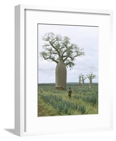 A Man Looks at a Baobab Tree-Luis Marden-Framed Art Print
