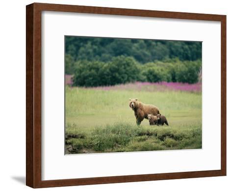 An Alaskan Brown Bear Keeps an Eye on Her Cubs-Roy Toft-Framed Art Print