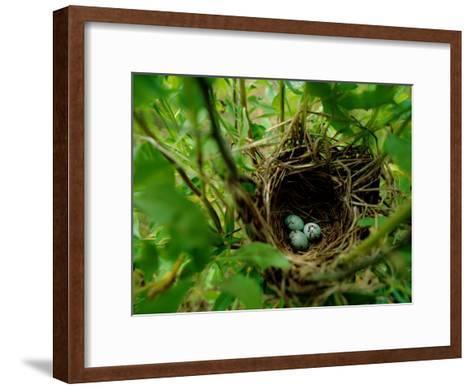 Bird Nest with Eggs-James P^ Blair-Framed Art Print