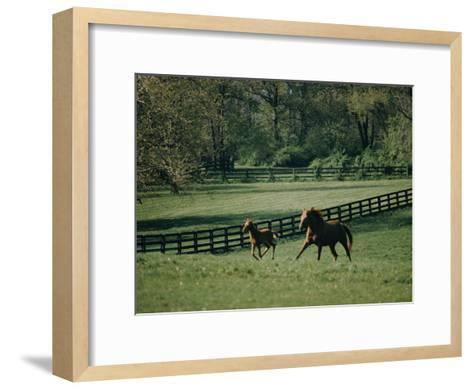 A Horse and its Colt Run Through a Field-Dick Durrance-Framed Art Print