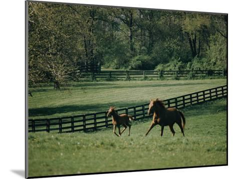 A Horse and its Colt Run Through a Field-Dick Durrance-Mounted Photographic Print
