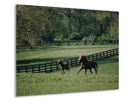A Horse and its Colt Run Through a Field-Dick Durrance-Metal Print