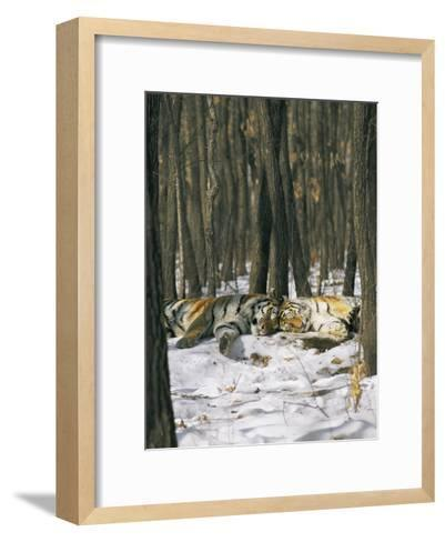 Two Tigers Take a Nap Together-Marc Moritsch-Framed Art Print