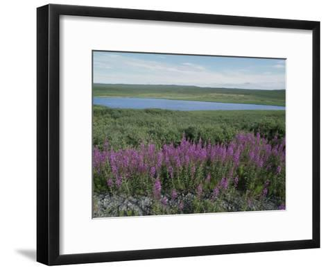Fireweed Blooms on the Tundra Near a Lake-Rich Reid-Framed Art Print