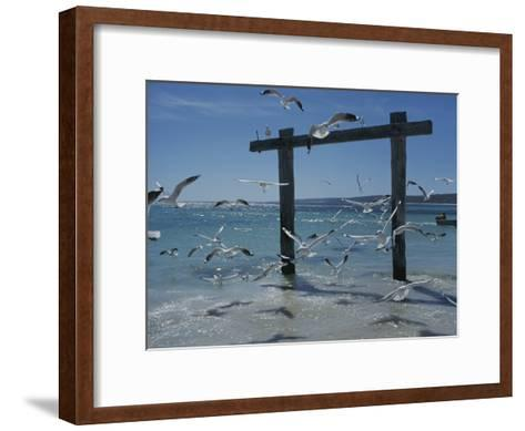 Sea Gulls Hover over Surf Around a Piling-Sam Abell-Framed Art Print
