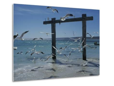 Sea Gulls Hover over Surf Around a Piling-Sam Abell-Metal Print