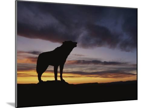 Howling Wolf Silhouetted against Sunset Sky-Norbert Rosing-Mounted Photographic Print