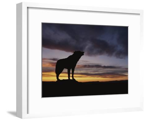 Howling Wolf Silhouetted against Sunset Sky-Norbert Rosing-Framed Art Print