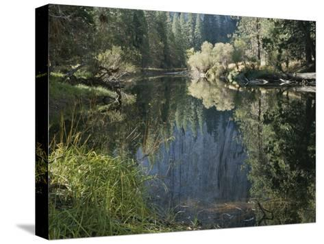 Autumn View Along the Merced River-Marc Moritsch-Stretched Canvas Print