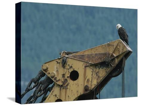 A Northern American Bald Eagle Sits Atop a Construction Vehicles Highest Point-Norbert Rosing-Stretched Canvas Print