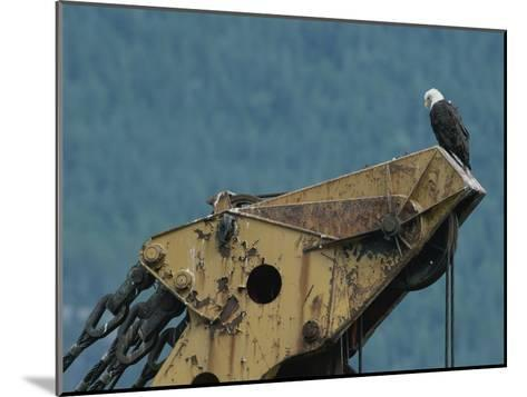 A Northern American Bald Eagle Sits Atop a Construction Vehicles Highest Point-Norbert Rosing-Mounted Photographic Print