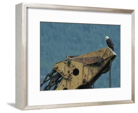 A Northern American Bald Eagle Sits Atop a Construction Vehicles Highest Point-Norbert Rosing-Framed Art Print