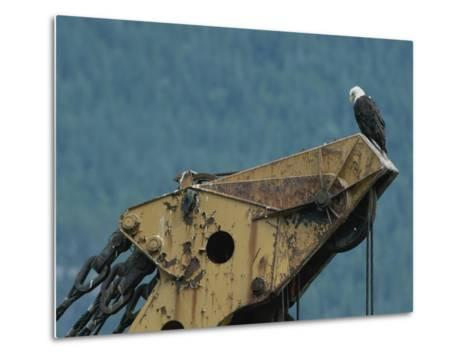 A Northern American Bald Eagle Sits Atop a Construction Vehicles Highest Point-Norbert Rosing-Metal Print