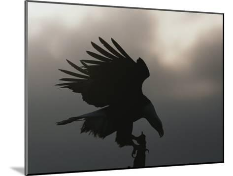 A Silhouetted Northern American Bald Eagle-Norbert Rosing-Mounted Photographic Print