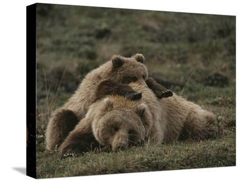 A Grizzly Mother and Her Cub Lounge Together in a Field-Michael S^ Quinton-Stretched Canvas Print