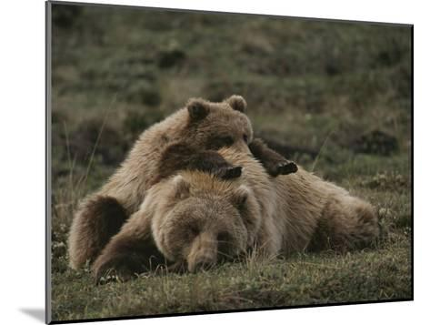 A Grizzly Mother and Her Cub Lounge Together in a Field-Michael S^ Quinton-Mounted Photographic Print