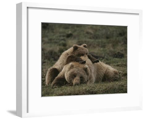 A Grizzly Mother and Her Cub Lounge Together in a Field-Michael S^ Quinton-Framed Art Print