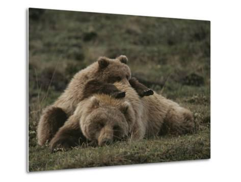 A Grizzly Mother and Her Cub Lounge Together in a Field-Michael S^ Quinton-Metal Print