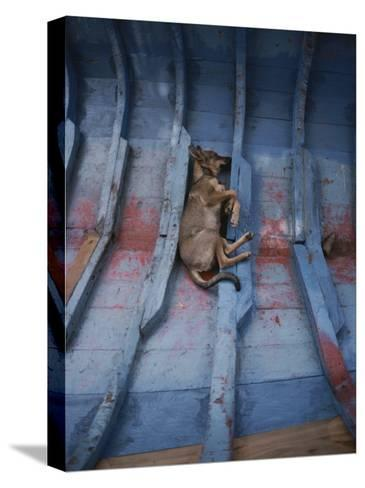A Village Dog Naps in the Bottom of a Cat Boat-Bill Curtsinger-Stretched Canvas Print