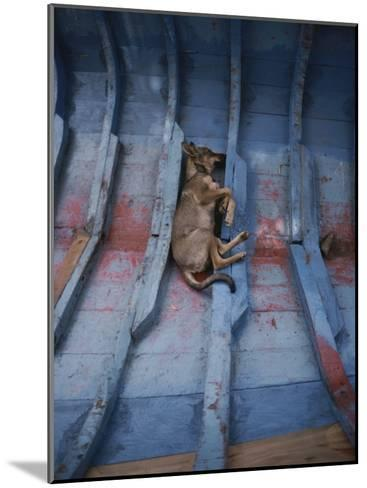 A Village Dog Naps in the Bottom of a Cat Boat-Bill Curtsinger-Mounted Photographic Print