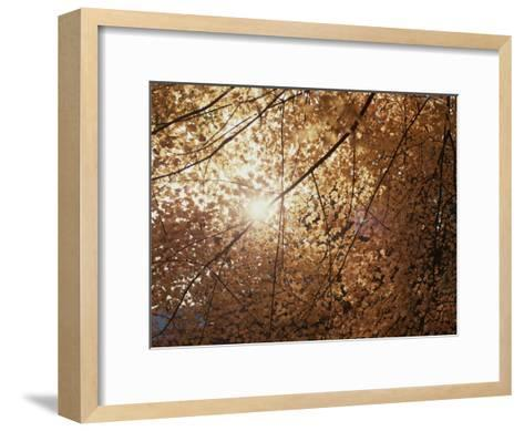 Sun Peeks Through a Canopy of Yellow Autumn Leaves-Stephen St^ John-Framed Art Print
