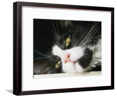 Close View of Black-And-White Short-Haired Cat-Brian Gordon Green-Framed Art Print