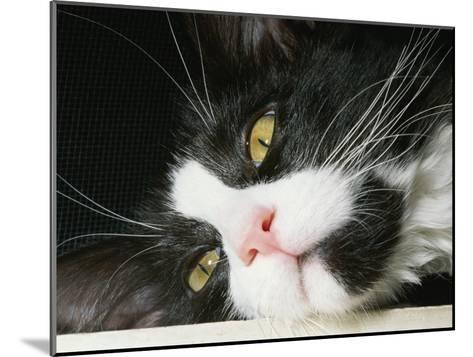 Close View of Black-And-White Short-Haired Cat-Brian Gordon Green-Mounted Photographic Print