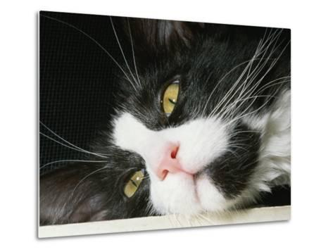 Close View of Black-And-White Short-Haired Cat-Brian Gordon Green-Metal Print