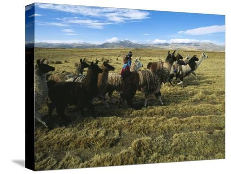 A Herder Walks Her Flock of Llamas Towards Lake Titicaca-Kenneth Garrett-Stretched Canvas Print