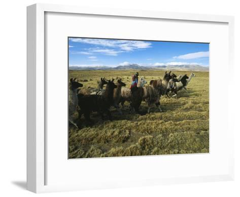 A Herder Walks Her Flock of Llamas Towards Lake Titicaca-Kenneth Garrett-Framed Art Print