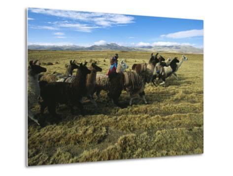A Herder Walks Her Flock of Llamas Towards Lake Titicaca-Kenneth Garrett-Metal Print