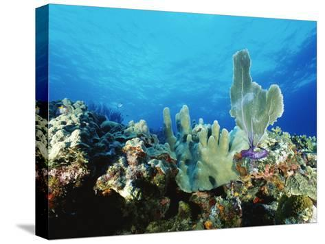 Underwater View of a Reef in the British Virgin Islands-Raul Touzon-Stretched Canvas Print