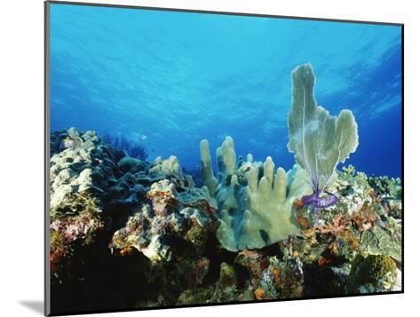 Underwater View of a Reef in the British Virgin Islands-Raul Touzon-Mounted Photographic Print