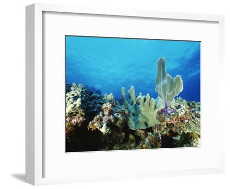 Underwater View of a Reef in the British Virgin Islands-Raul Touzon-Framed Art Print