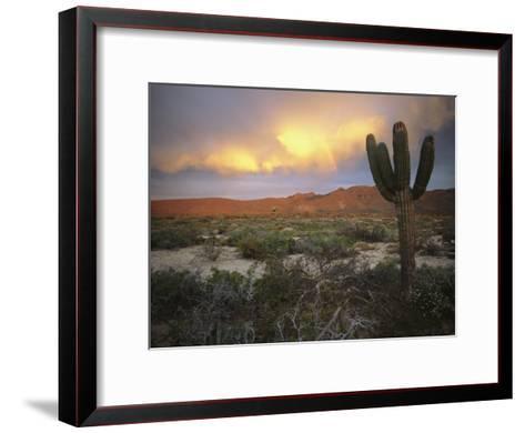 A Lone Cactus in a Desert Scene-Ed George-Framed Art Print