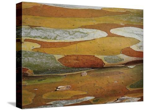 Abstract Created by a Close View of Snow Gum Tree Bark-Jason Edwards-Stretched Canvas Print