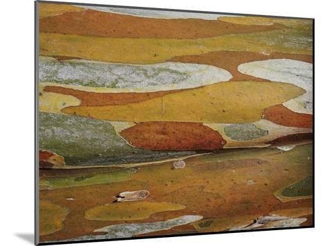 Abstract Created by a Close View of Snow Gum Tree Bark-Jason Edwards-Mounted Photographic Print