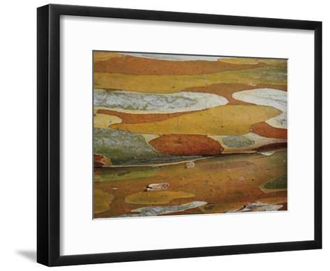Abstract Created by a Close View of Snow Gum Tree Bark-Jason Edwards-Framed Art Print