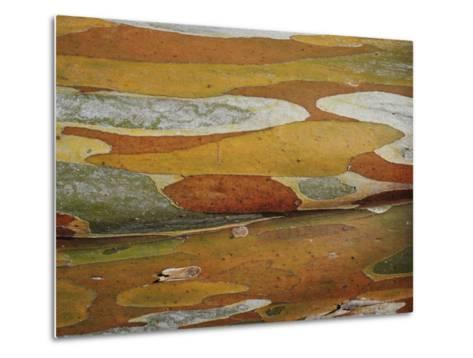Abstract Created by a Close View of Snow Gum Tree Bark-Jason Edwards-Metal Print