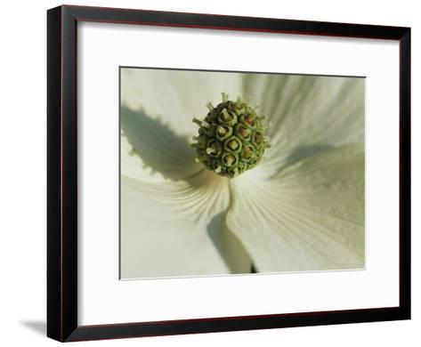 Close View of a Dogwood Blossom-Darlyne A^ Murawski-Framed Art Print