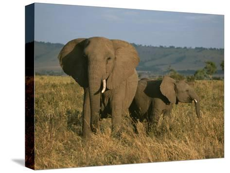 A Female Elephant with Her Baby on a Masai Mara Plain-Roy Toft-Stretched Canvas Print