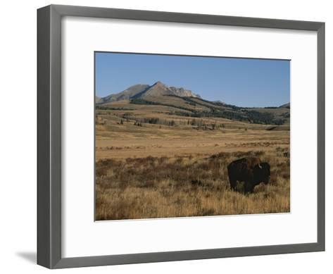 An American Bison Standing in a Prairie-Tom Murphy-Framed Art Print