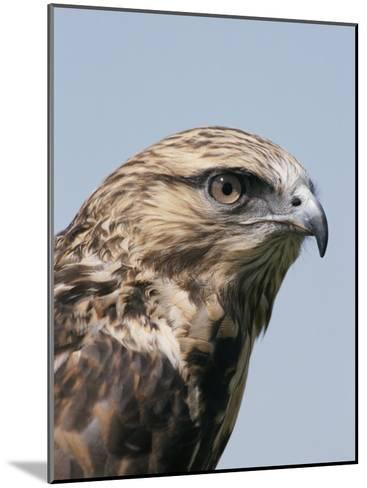A Close View of the Head of a Rough-Legged Hawk, Buteo Lagopus-Tom Murphy-Mounted Photographic Print