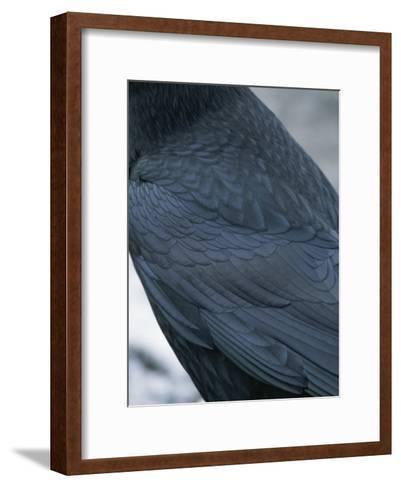 A Close View of the Back and Wing of a Raven-Tom Murphy-Framed Art Print