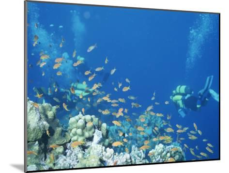 Divers Enjoy the Beauty of the Reefs and Marine Life in the Red Sea-Peter Carsten-Mounted Photographic Print